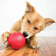 Load image into Gallery viewer, Dog playing with KONG biscuit ball va0