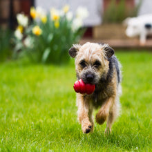 Load image into Gallery viewer, Dog playing with KONG Classic Medium va3