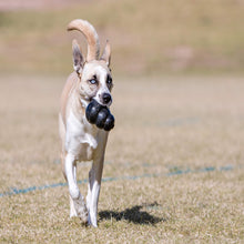 Load image into Gallery viewer, Dog playing with KONG Extreme X-Large va4
