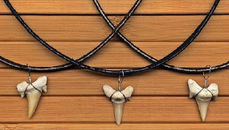 7cc65532555ab Charming Shark Shark Tooth Necklace on Suede Cord