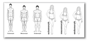 3 male and female body types explained