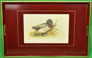 Brooks Brothers Mallard Burgundy Lacquered Tray