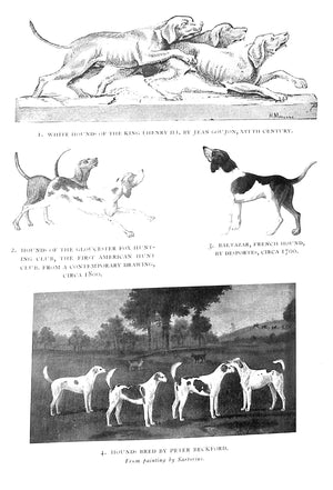 'Hounds and Hunting Through The Ages'