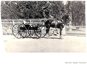 """Driving for Pleasure: Or, The Harness Stable and Its Appointments"" UNDERHILL, Francis T."