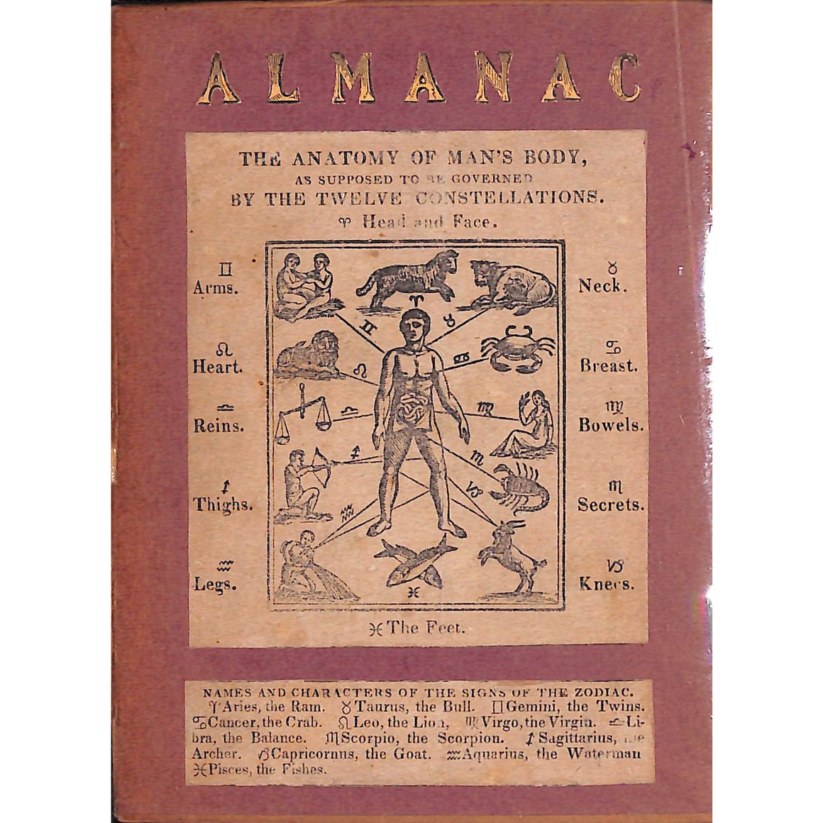 Almanac; The Anatomy of Man's Body
