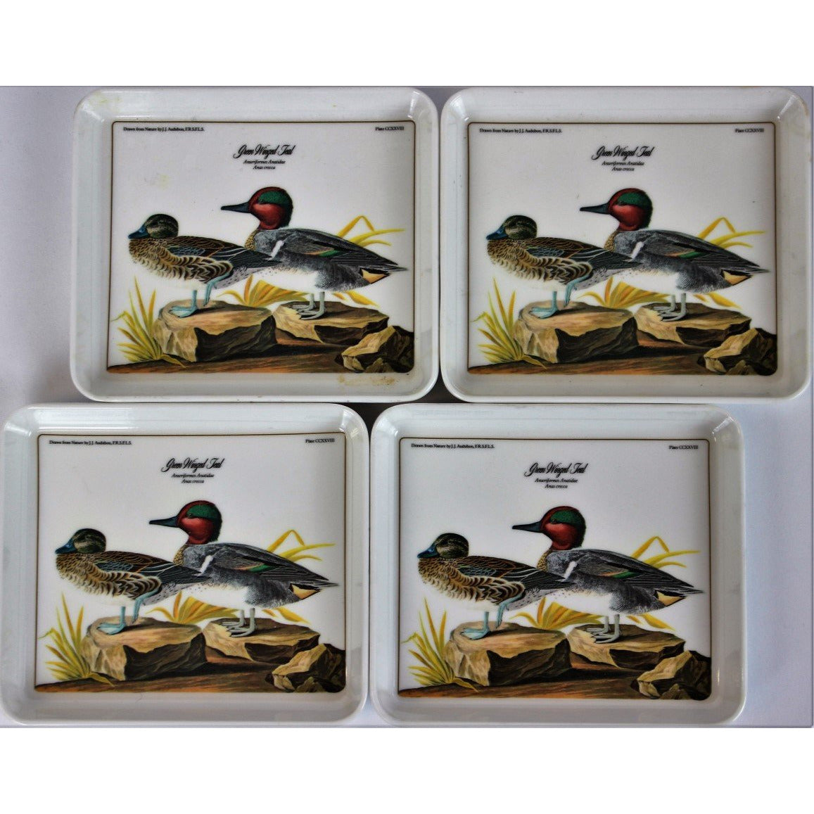 Set of 4 Green Winged Teal Audubon Coasters