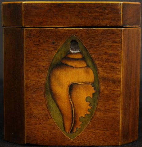 19th Century Shell Marquetry Tea Caddy