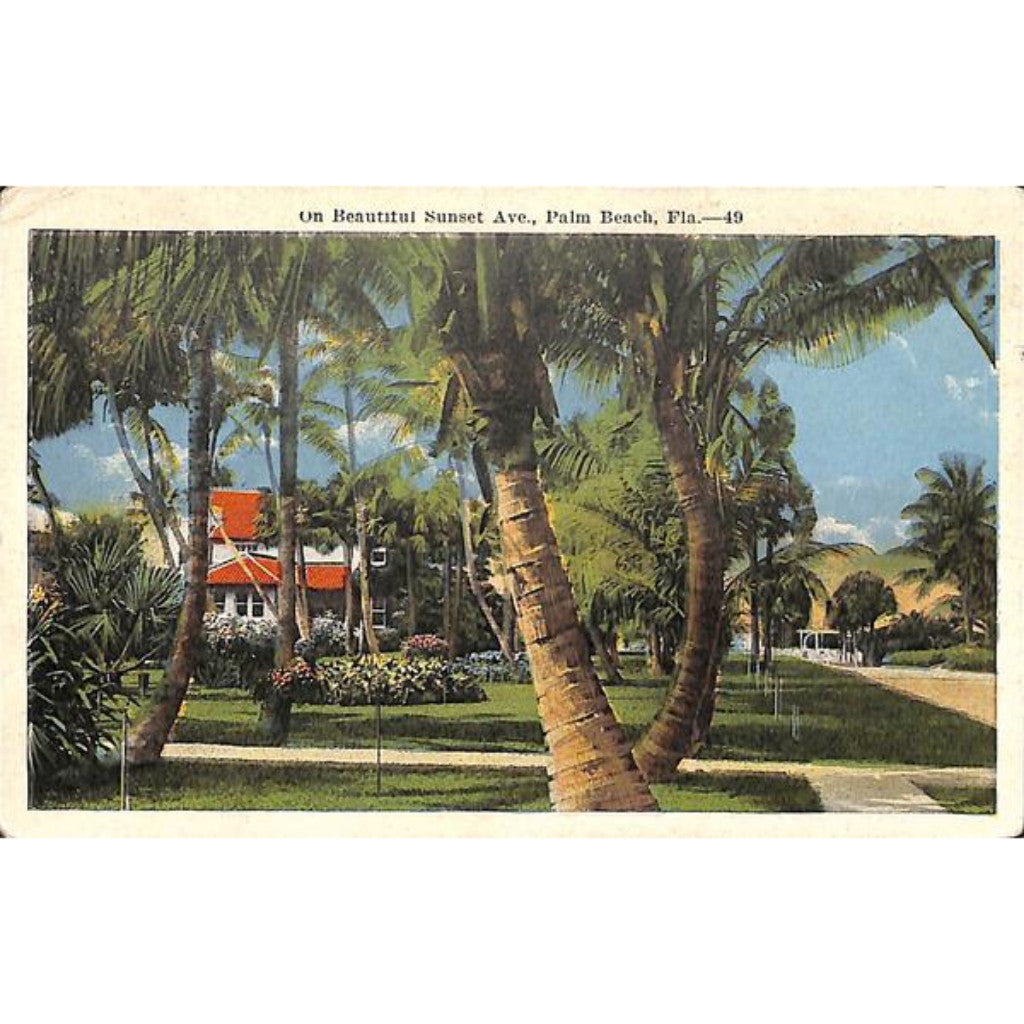 On Beautiful Sunset Ave., Palm Beach Post Card
