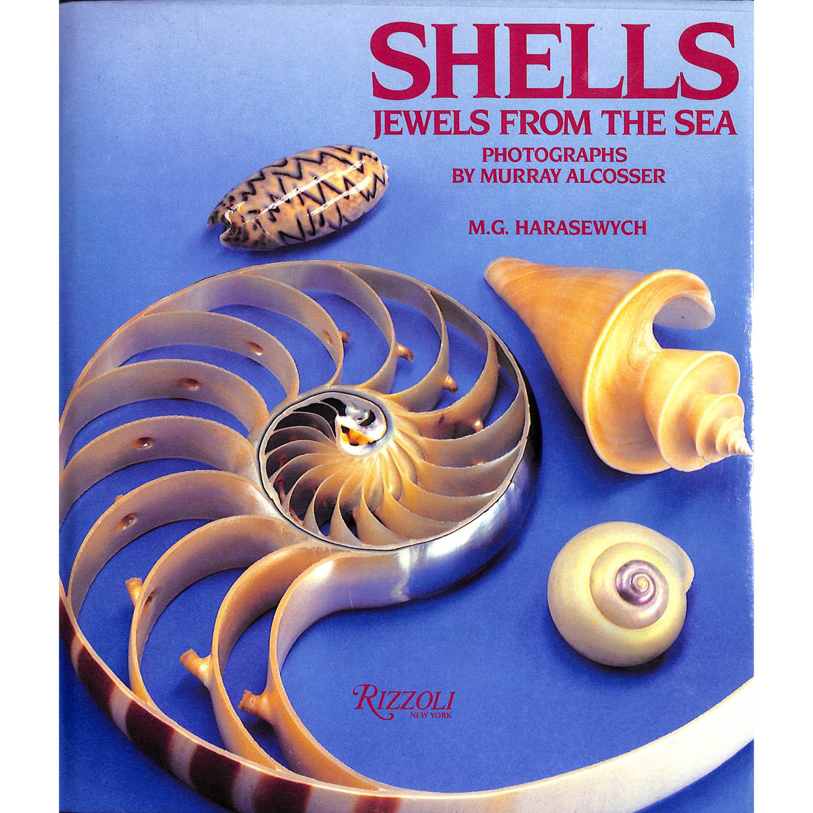 Shells Jewels From The Sea