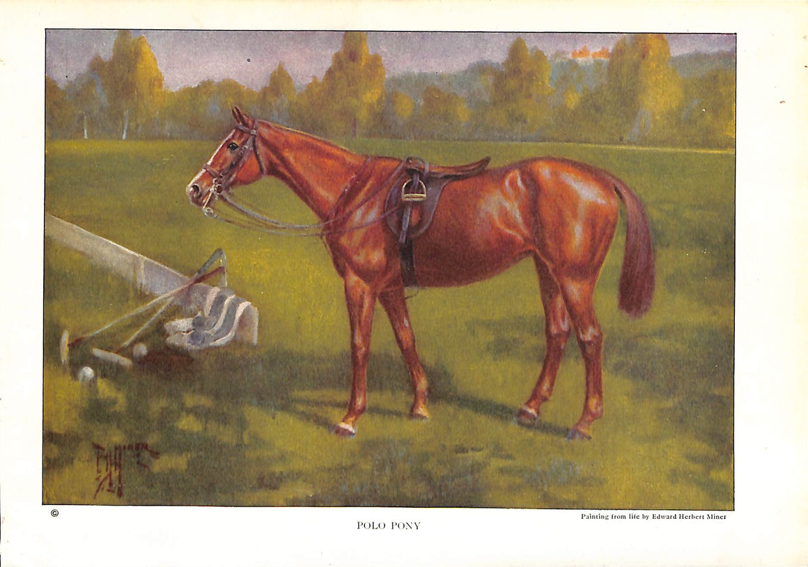 Polo Pony by Edward Herbert Miner