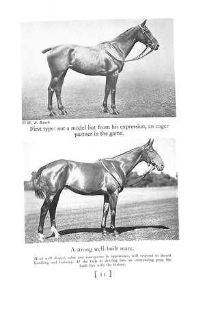 """Selection and Training of The Polo Pony"" CULLUM, Grove"