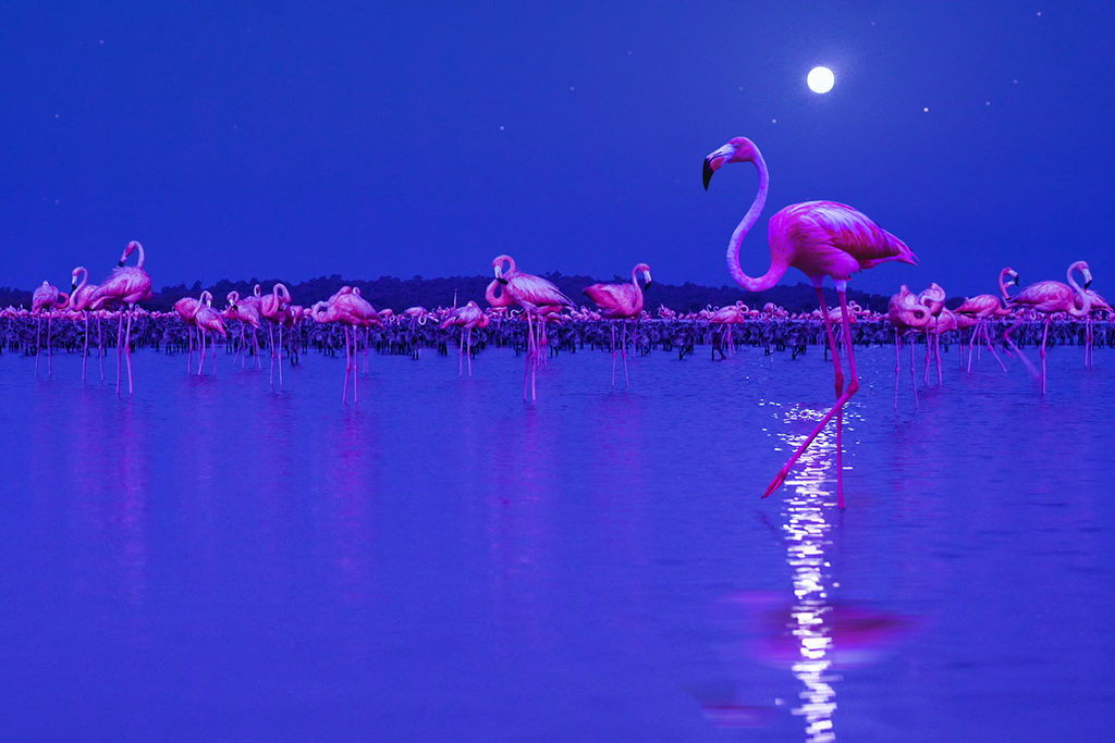 Flamingos under the moonlight, image taken from the documentary Night on Earth
