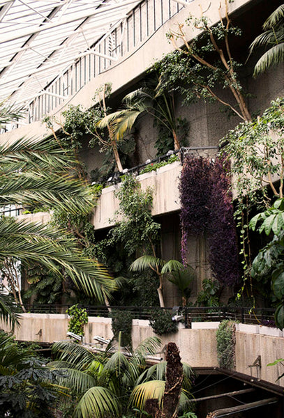 The Barbican Conservatory. Image credit: Kit Lee from Style Slicker