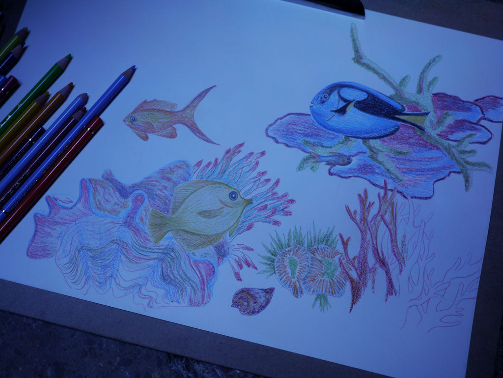So much colour, so little time! Filling our sketchbook with a technicolour, underwater world.