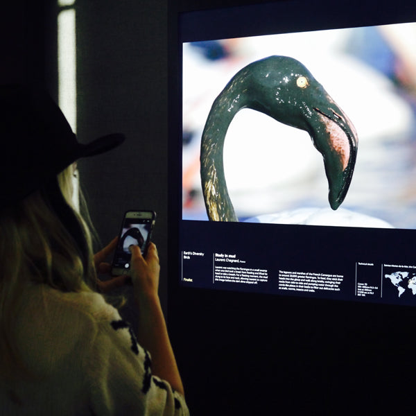 "Left: We couldn't help but photograph the stunning birds that were shown during the exhibition - the muddy Flamingo was a humorous display. Right: Bence Máté's ""Portrait of a pelican"" featured arresting colours, textures and shapes."