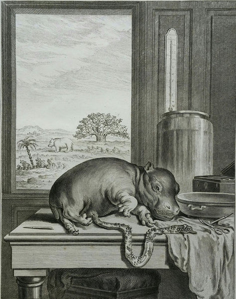 Left: L'Hippopotame, from Comte de Buffon's Histoire Naturelle, 1764, Etching, Collection Alexandra Loske. Right: The Nubian Giraffe, Jacques-Laurent Agasse, 1827. Courtesy ROYAL COLLECTION TRUST. Copyright Her Majesty Queen Elizabeth II 2015