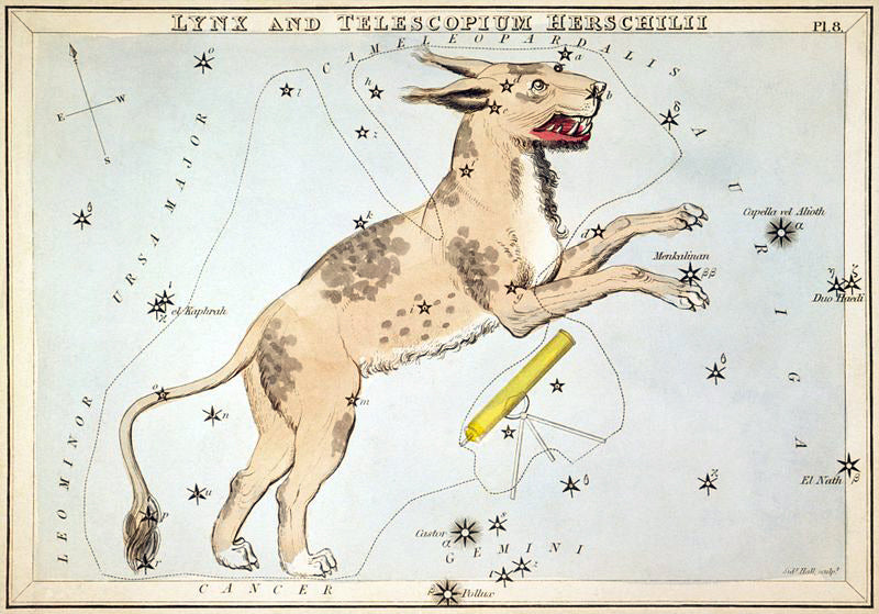 Emma takes inspiration from all kinds of visuals, and this is the perfect example. Pictured is the Lynx and Telescopium Hershelii star chart card from 1824's Urania's Mirror