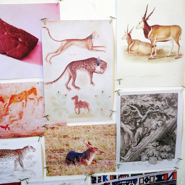 Emma's moodboards for the Wilderness collection are fascinating to explore. You can find vintage illustrations of African wildlife; postcards; Emma's photographs from her South African trip and of course the rock paintings created thousands of years ago by the indigenous San hunter-gatherers, all of which inspired the creation of the Lynx design