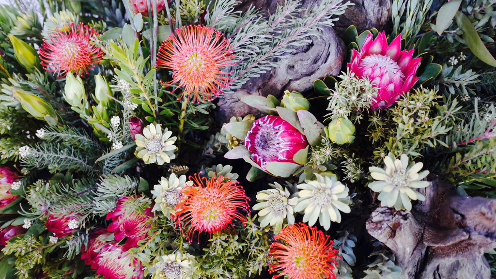 A striking Protea display at the Clanwilliam Living Landscape Project