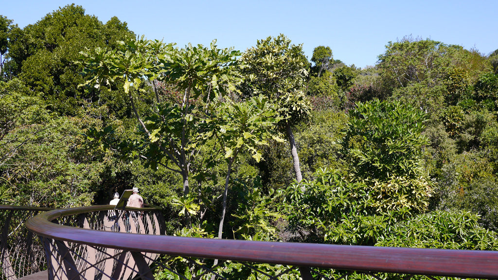 The view from the treetop 'Boomslang' walk at Kirstenbosch