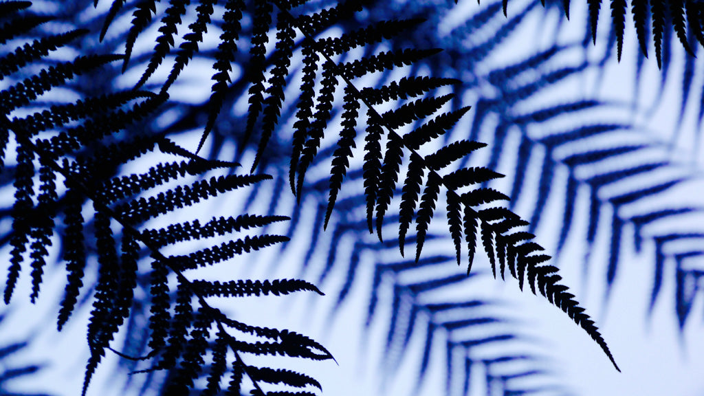 Ferns silhouetted against the sky