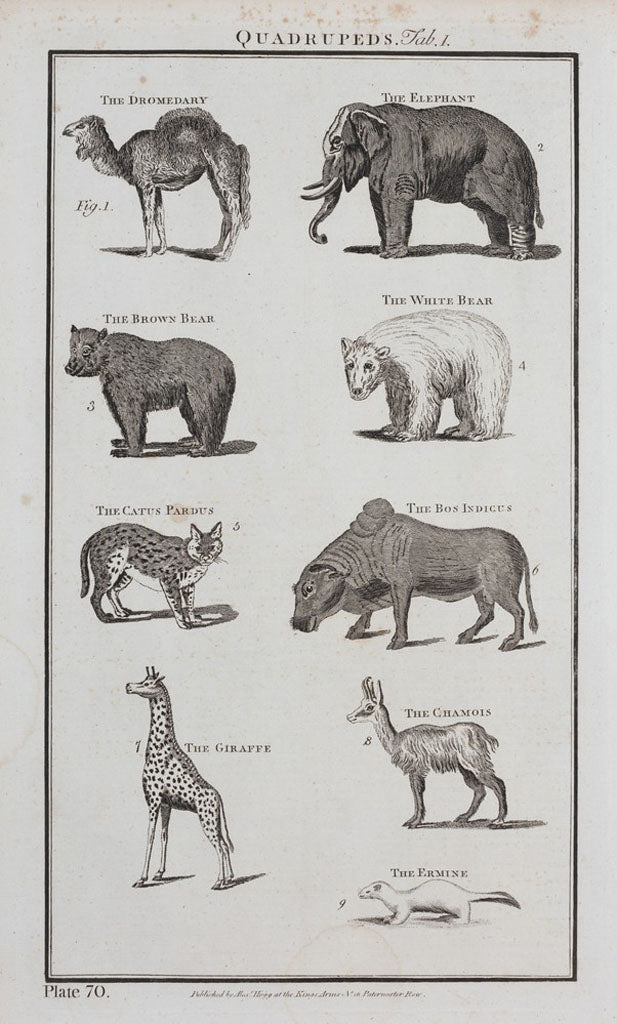 Quadrupeds illustration from a late 18th century encyclopaedia. Private collection.
