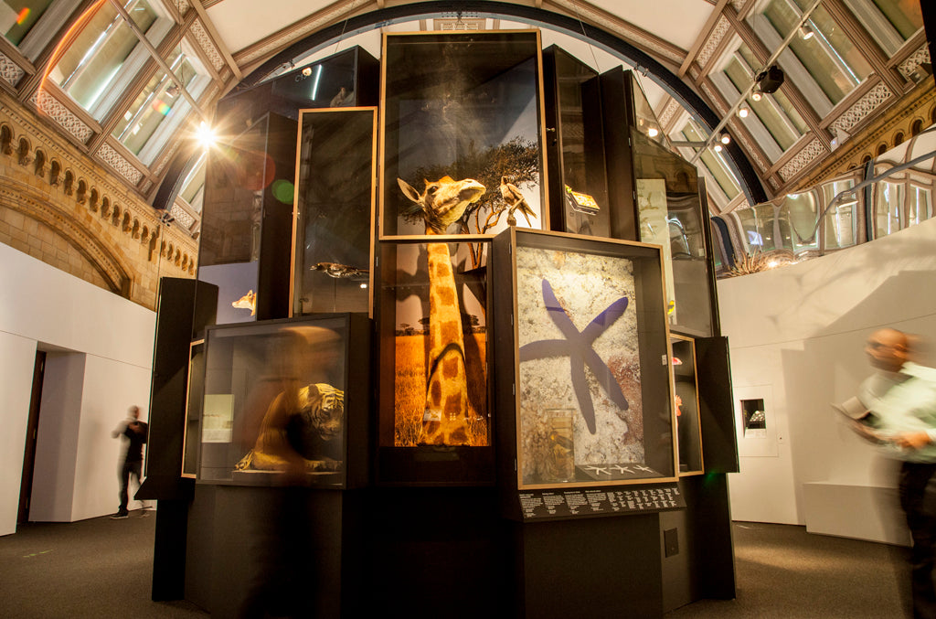 Right: Specimen tower featured in the Colour and Vision exhibition. © Trustees of NHM, London