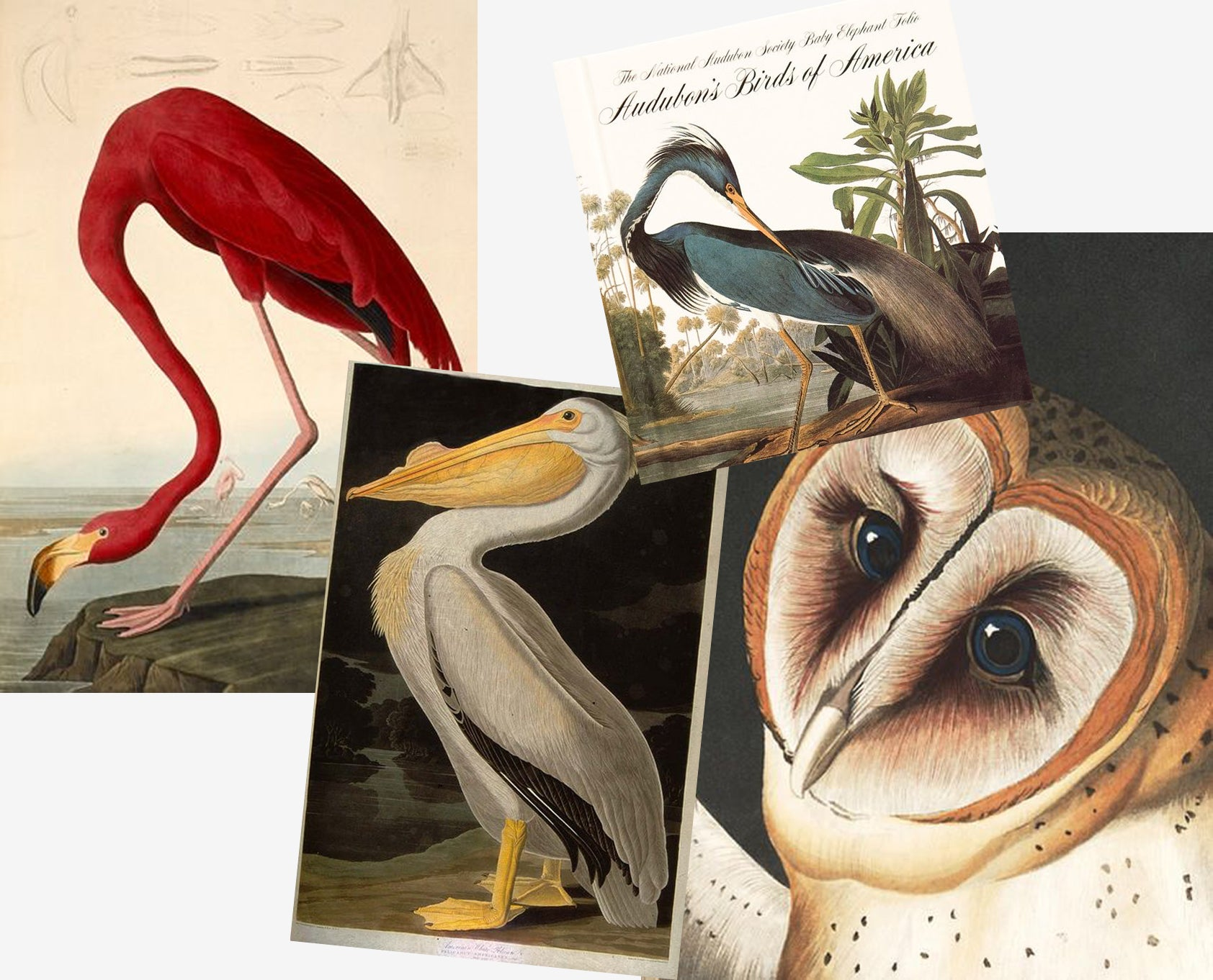 The work of John James Audubon was a great influence on the Audubon design by Emma J Shipley. The explorer, ornithologist and botanical painter created meticulous wildlife illustrations in the 19th century.
