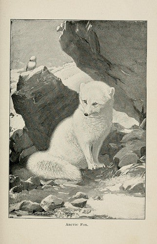 emma j shipley polar collection inspiration foxes