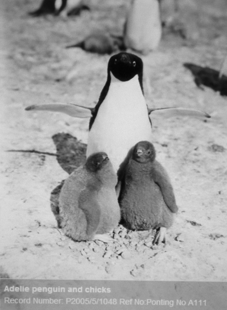 emma j shipley polar collection inspiration penguins