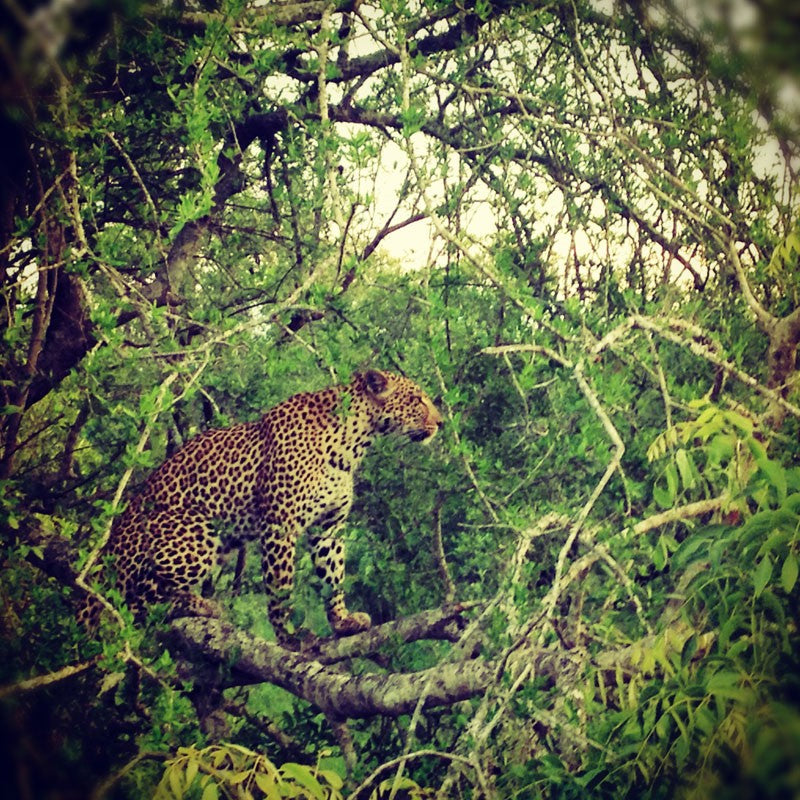 emma j shipley audubon inspiration south africa cheetah
