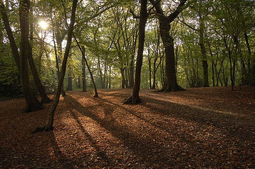Highgate Wood North London