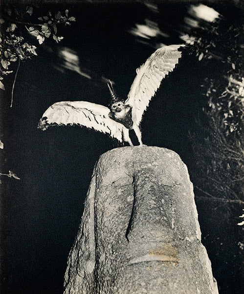 Photo credit left: Cercophitecus Icarocornu from the Fauna series by Joan Fontcuberta and Pere Formiguera 1985.