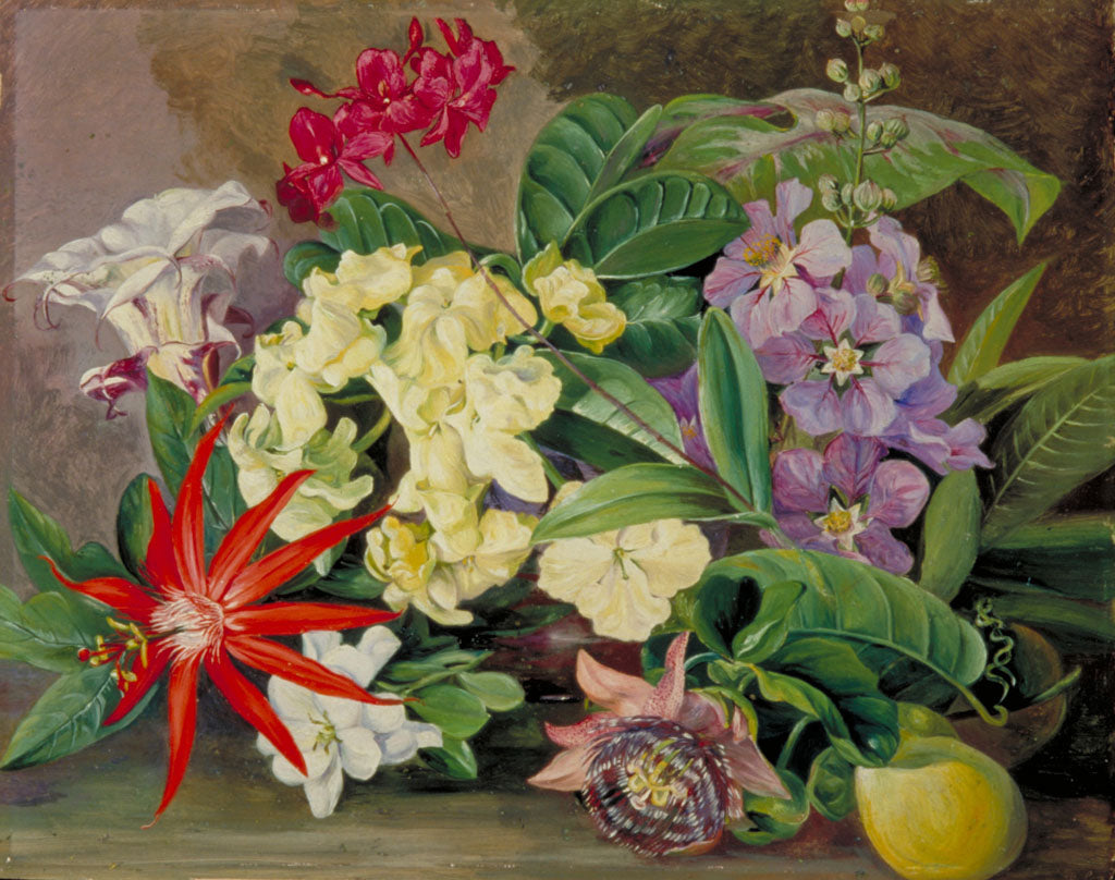 Right: Cultivated Flowers, painted in Jamaica. Copyright RBG Kew