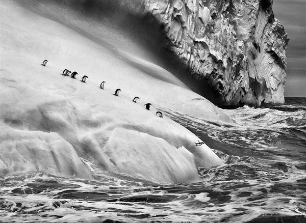 Stunning photographs captured by Sebastião Salgado depicting the magical march of the penguins, a famous ritual which inspired the key characters of Emma J Shipley's Expedition design