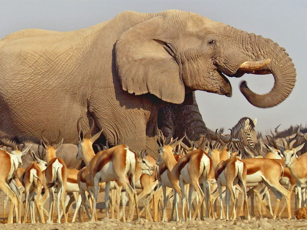 The documentary collaboration between the Discovery Channel and the BBC - Africa. Image taken from the series displaying Elephants grazing among zebras and gazelles