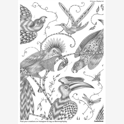 Audubon Colouring Page Free Download