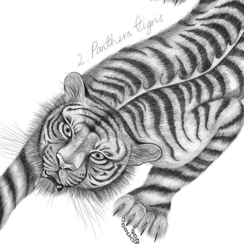 Panthera Tigris Mini Print - Unframed