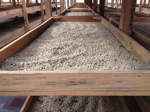 huehuetenango coffee drying guatemala