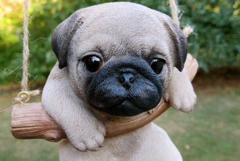Pug Dog Puppy Hanging on a Swing