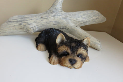 Yorkshire Terrier Puppy Lying Down on Tummy