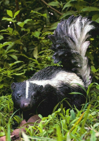 Skunk Walking Figurine  Resin Countryside Animal 12 inches high