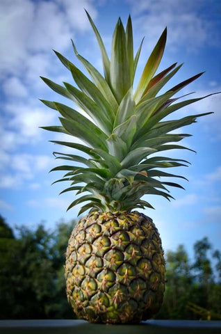 Kauaʻi Sugarloaf Pineapple Single Pack