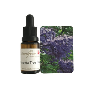 Australian flower essences. jacaranda tree flower essence remedy. sacred flower essences