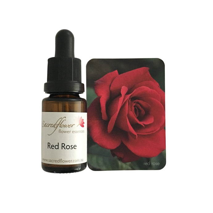 Australian flower essences. red rose flower essence remedy. sacred flower essences