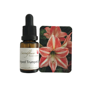 Australian flower essences. stripped trumpet lily flower essence remedy. sacred flower essences