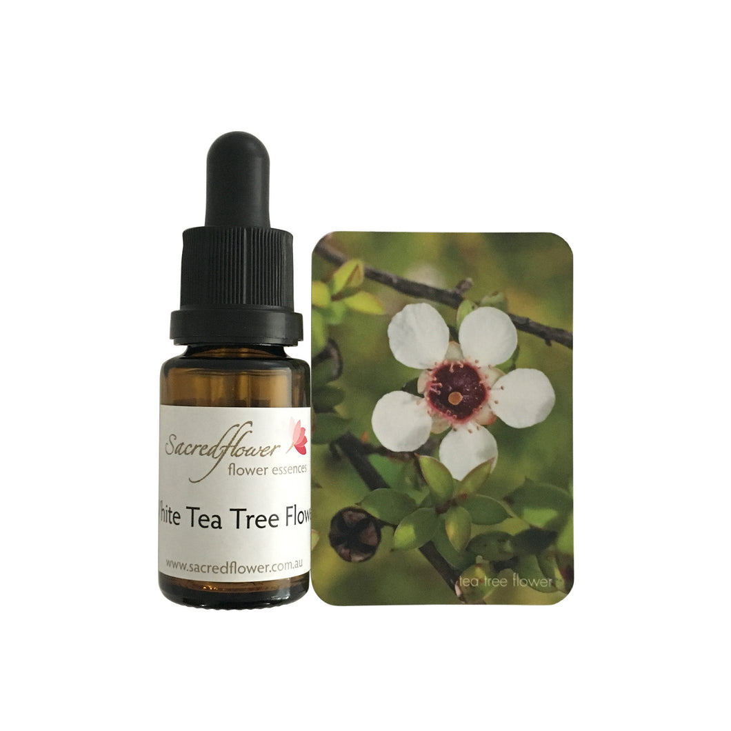 Australian flower essences. flower essence remedy. sacred flower essences