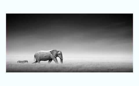 Elephant and Zebra Art Print from 55MAX