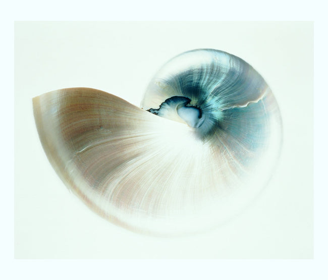 Aqua Nautilus Shell Art Print Only