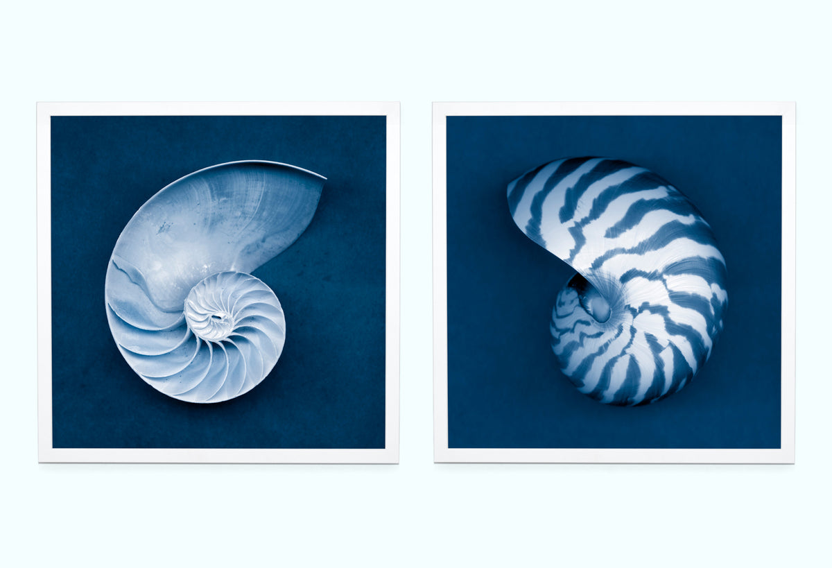 Nautilus Shells Art Print Set